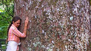 shantara-hugging-kauri-tree-list-300