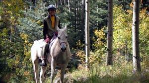 Our Horse Ashram
