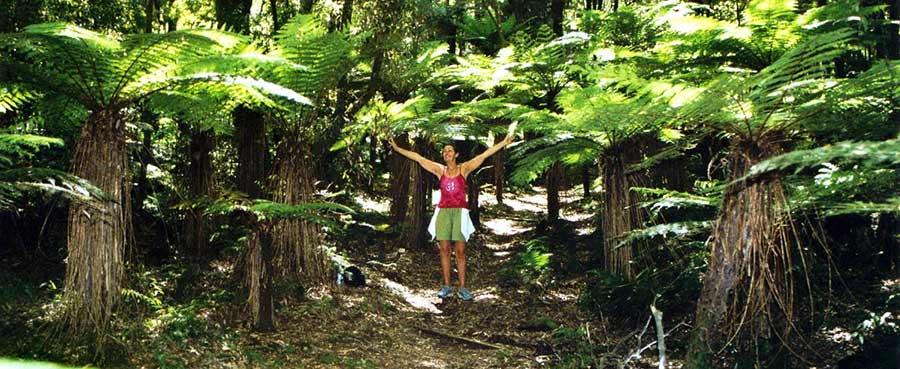 Shantara in Fern Forest in Urewwra Mountains of New Zealand