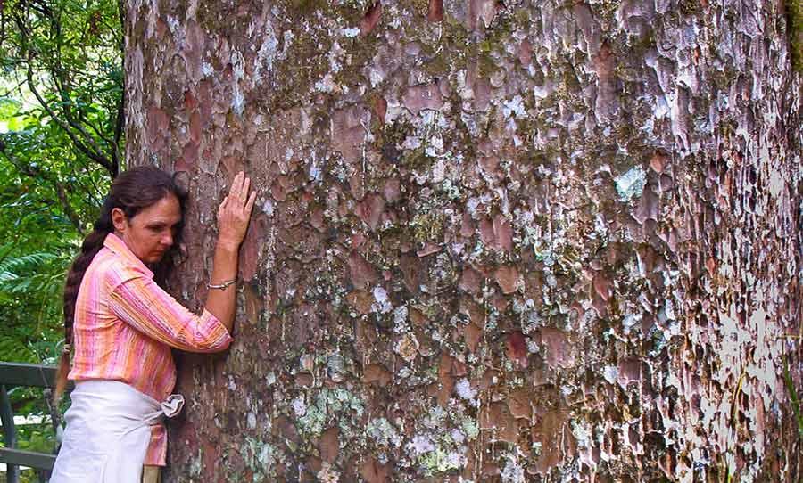 Shantara Embracing a Kauri Tree in Northland of New Zealand
